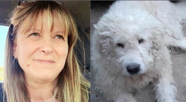 Animalista aggredita in strada: «Un uomo col casco ha iniziato a colpirmi, salvata dai miei cani» Il racconto choc