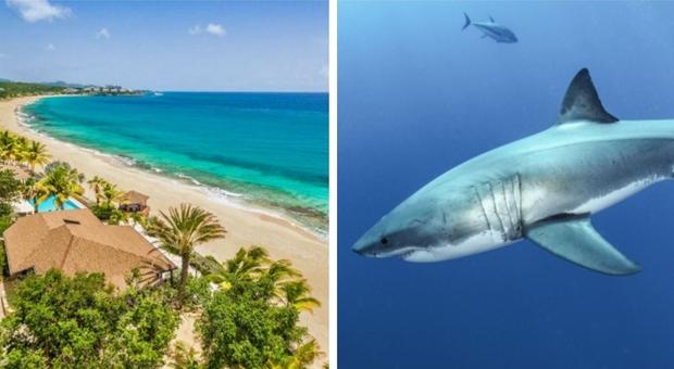Caraibi, donna di 40 anni attaccata e uccisa da uno squalo. Le autorità: «Qui è un fatto rarissimo»