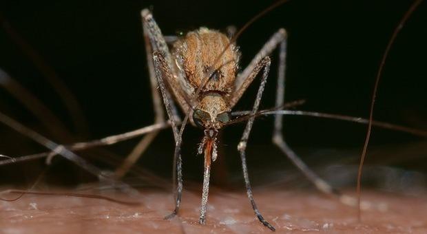 Non solo febbre del Nilo: scoperti 10 casi di malaria in pochi giorni