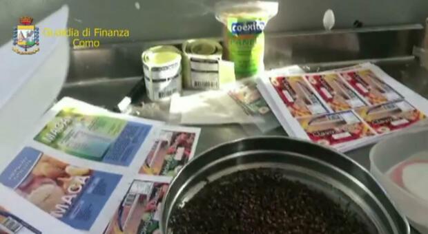 Milano, cibi etnici avariati con vermi e insetti: maxisequestro di cereali, riso, mais, patate e legumi