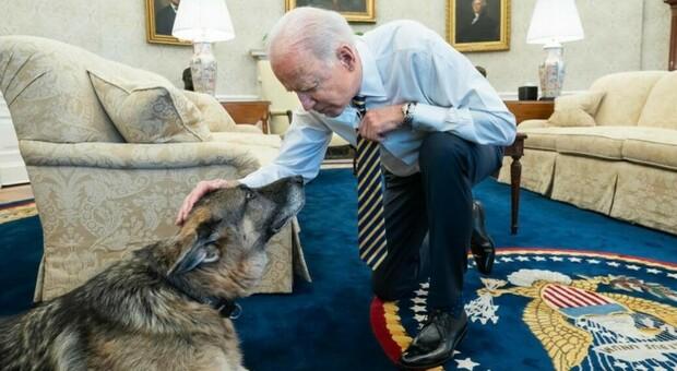 Biden, i cani allontanati dalla Casa Bianca per «aggressione a un addetto alla sicurezza»