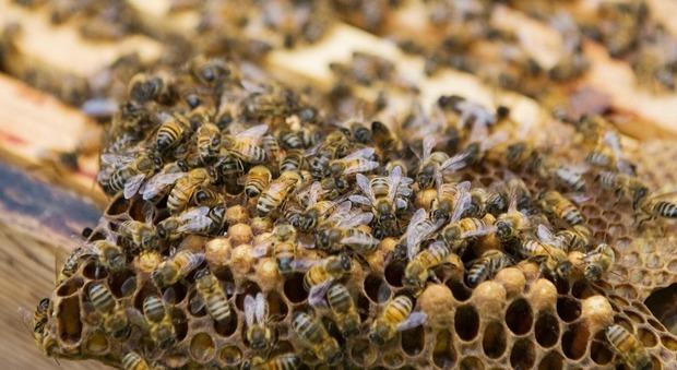 Papà va al funerale del suo unico figlio: ucciso da uno sciame d'api