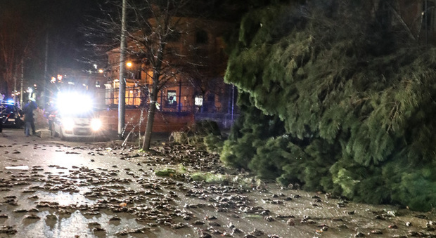 L'albero caduto davanti al Policlinico Umberto I