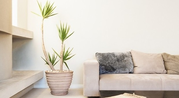 Piante d 39 appartamento ecco le migliori per purificare l 39 aria - Piante che purificano l aria in camera da letto ...
