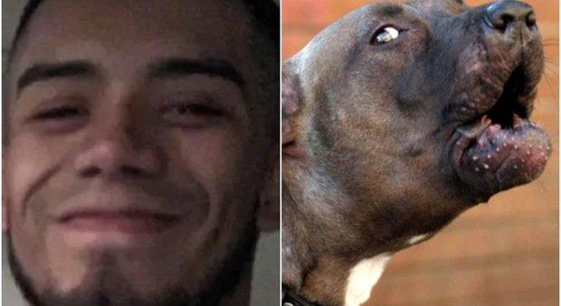Pitbull sbrana e uccide il padrone: «Un cane tranquillo, lo lasciavamo giocare con i bimbi»