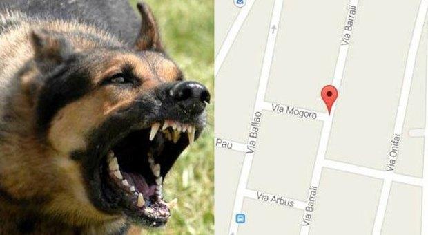 Bimbo di 5 anni morso al volto da un cane il padrone aveva - Cane da colorare le pagine libero ...