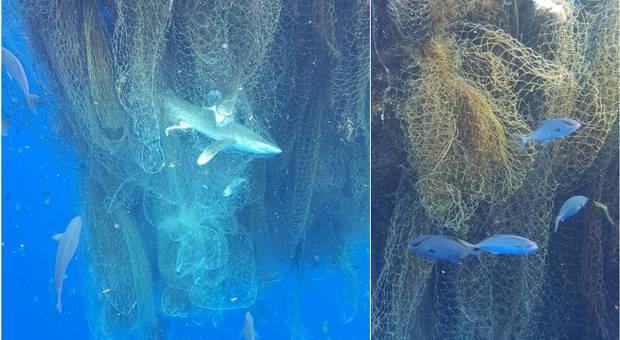 """Reti Killer: centinaia di squali trovati morti nella """"rete fantasma"""". La macabra scoperta di un sub ai Caraibi"""
