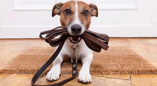 immagine Animali e condominio: regole e obblighi da rispettare