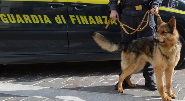 Professore non vuole il cane della Finanza a scuola: polemiche durante il blitz antidroga