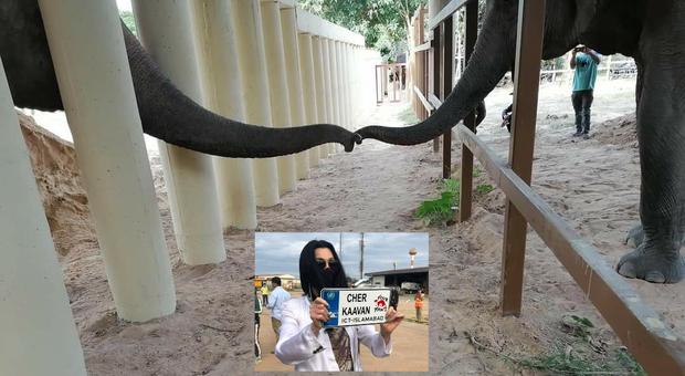 Kaavan, l'elefante più solo del mondo, dopo 8 anni ha finalmente compagnia e una madrina d'eccezione: Cher. (immag da Four Paws e Cher da Fb)