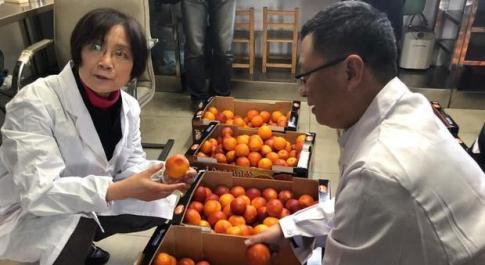Via della Seta, le arance siciliane in Cina con l'aereo grazie a Alibaba