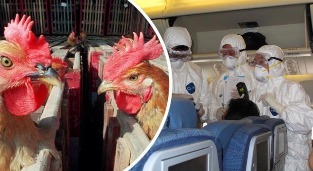 Allarme aviaria, un nuovo virus dalla Cina: «Rischio pandemia, può uccidere come la spagnola»