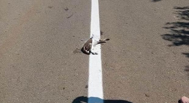 Operai rifanno le strisce sulla strada e passano sopra al gatto verniciandolo (immagine pubbl da Tudor-Tim Ionescu su Fb)