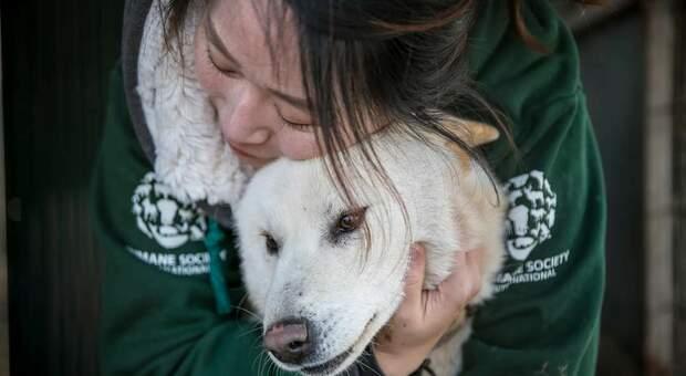 """Cani destinati a diventare zuppa """"bosintang"""" rinchiusi in allevamento lager in Corea del Sud: gli animalisti ne salvano 60"""