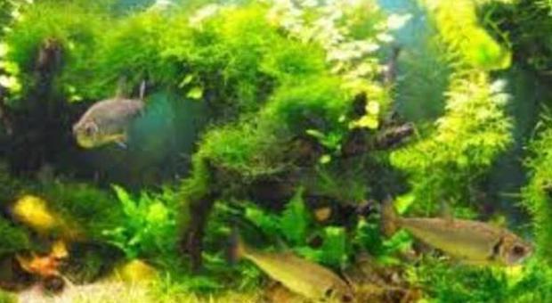 Sesso, i problemi di lui: dalle alghe una nuova cura