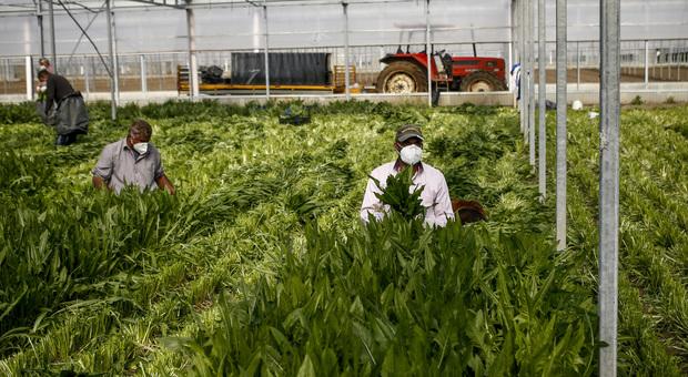 Reddito di cittadinanza, flop in agricoltura: i percettori snobbano il lavoro nei campi