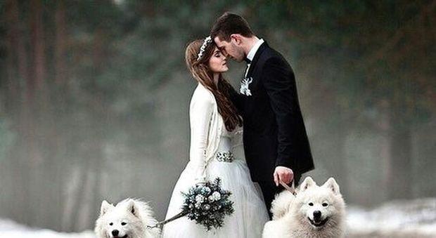 Risultato immagini per dog alle nozze