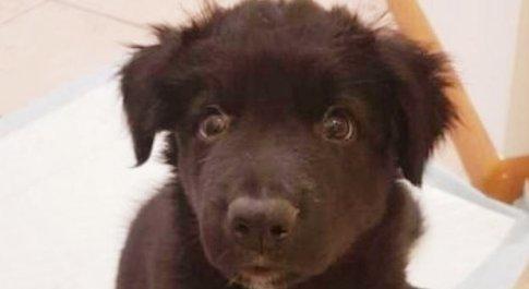 Il cucciolo messo all'asta (immagine diffusa da LAV Trento)