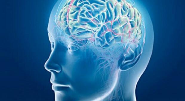 Alcolismo, scoperta nel cervello una molecola chiave che induce a bere