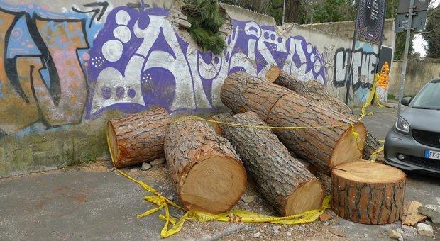 Roma, beffa alberi: abbattuti i sani, quelli malati ancora in piedi