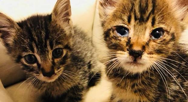 Quei Due Gattini Buttati Via Salvati Dai Bimbi Infermieri