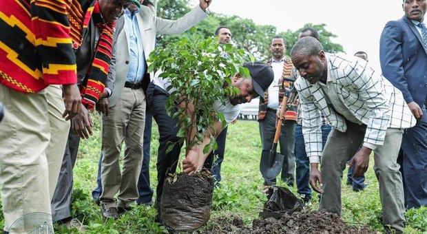 Piantati 350 milioni di alberi in un solo giorno in Etiopia per combattere i cambiamenti climatici