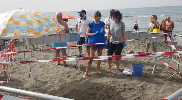L'area transennata sulla spiaggia di Ostia dove una tartaruga marina ha deposto le uova