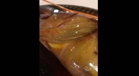 """La cernia viva in pentola: """"Non si rassegnava a morire"""". E il cuoco la fa rigettare in mare Video"""
