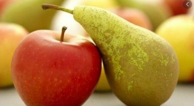 Dieta lampo, come perdere peso in poco tempo (e idratarsi meglio) mangiando le pere
