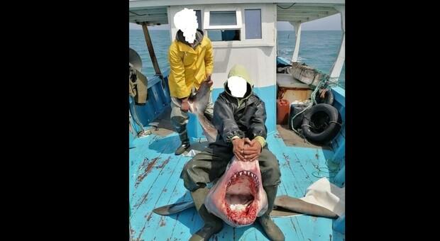 Squalo bianco ucciso dai pescatori nel Mediterraneo: la macabra foto fa il giro del mondo