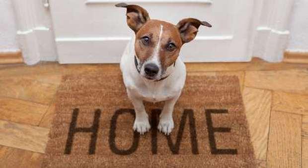 Regolamento Condominiale E Animali Domestici Come Evitare Le Liti