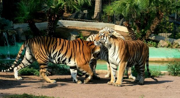 Abruzzo, la Regione paga i biglietti per lo zoo alle scuole. Insorgono gli ambientalisti