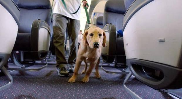 «Sull'aereo non possono salire i vostri cani». E gli italiani restano bloccati a Cancun, è polemica
