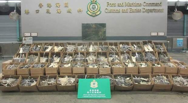Maxi sequestro di pinne di squalo a Hong Kong. (immagine pubbl da South China Morning Post- handout)