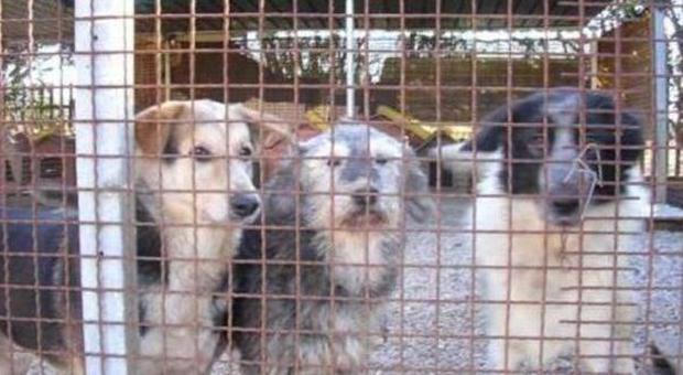 """Animali, Soriano nel Cimino in rivolta """"per la deportazione di 95 cani"""""""
