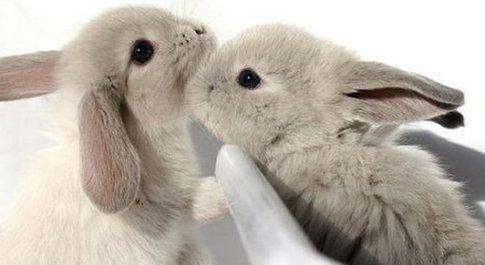 Prof uccide a martellate e viviseziona conigli in classe, Cassazione conferma: licenziato