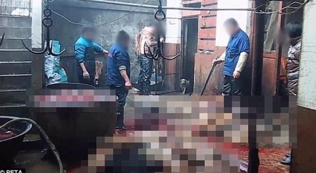 Cina choc, la denuncia degli animalisti: cani uccisi e scuoiati per fabbricare prodotti di pelle
