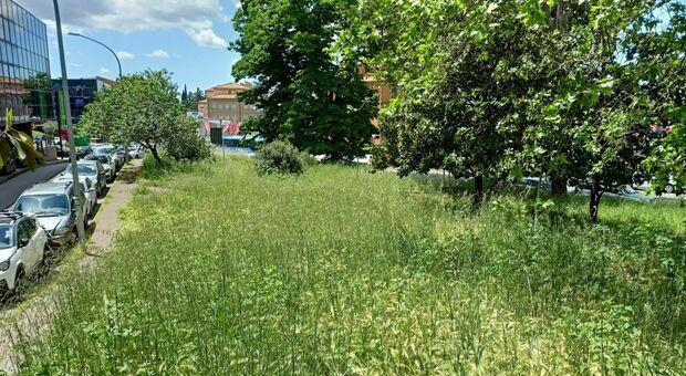 Emergenza verde in citta, il Comune: «Al lavoro per il nuovo bando e per la manutenzione»