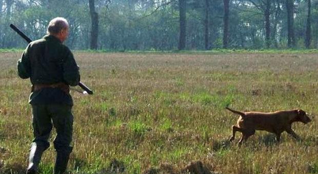 Tre cani da caccia trovati morti nelle campagne intorno a Orvieto. Indaga la procura di Terni