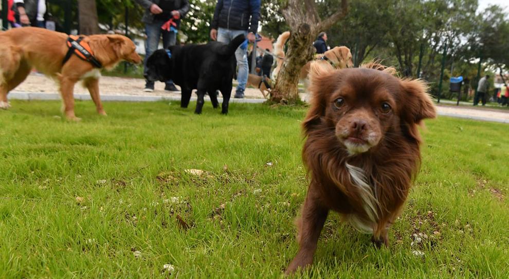 Un parco per cani