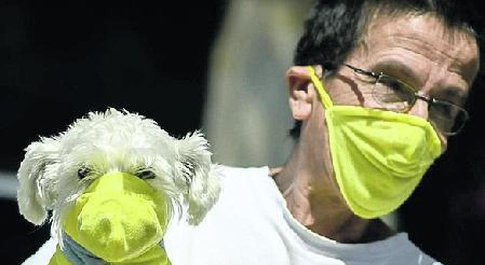 Coronavirus, anche gli animali domestici possono essere contagiati: isolarli dai padroni positivi