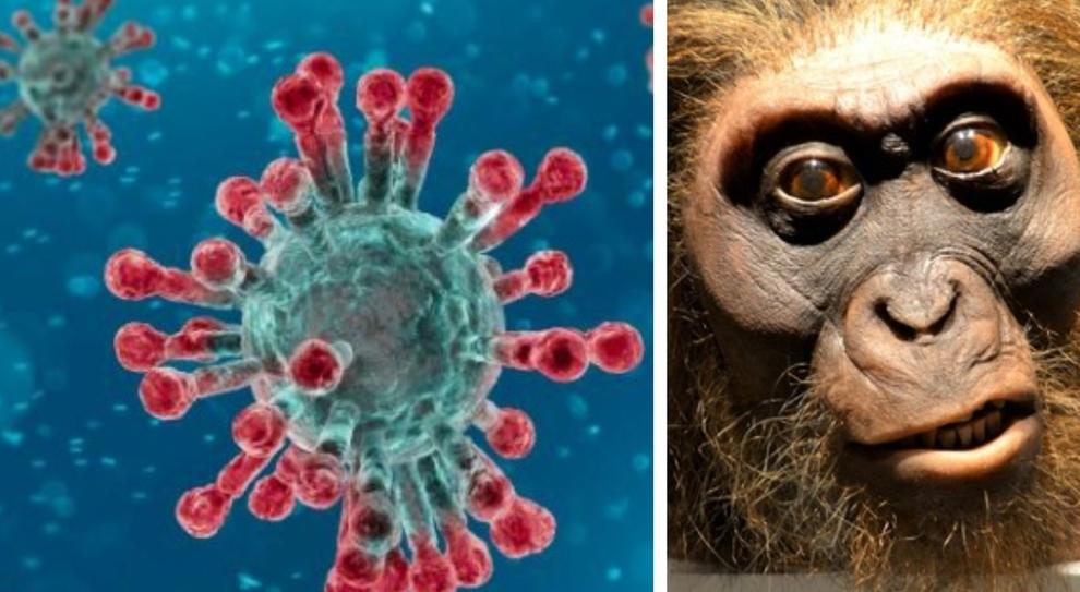 """Covid: dal Neanderthal ereditata l'arma genetica """"a doppio taglio"""", può salvare o far aggravare"""