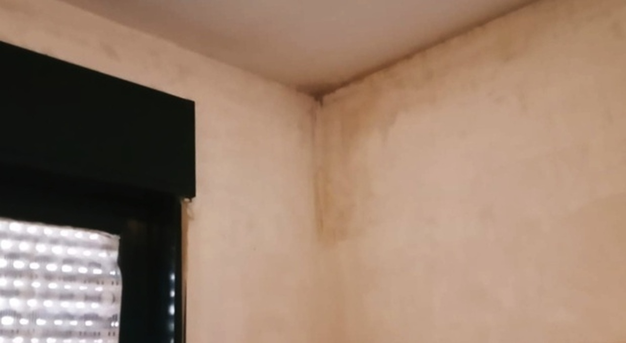 La muffa sulla parete