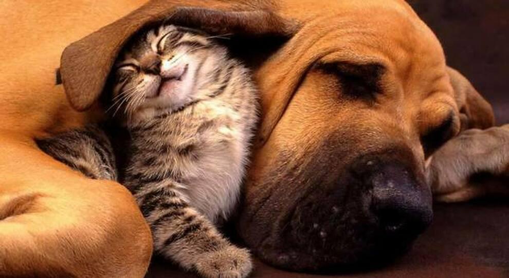 Cani e gatti in affido solo a chi li conosce. La Cassazione: «Multe sino a 10.000 euro»