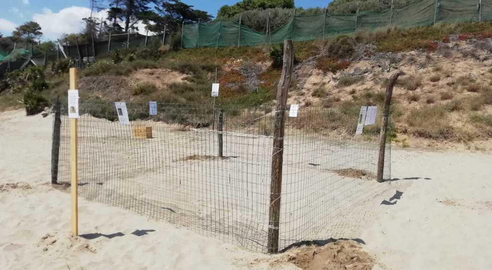 Il nido della Caretta caretta sul litorale di Fondi