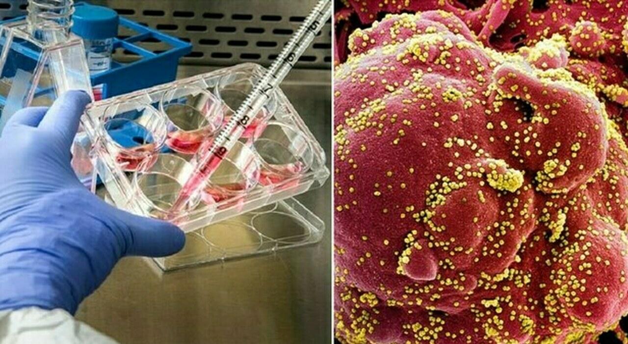 Varianti Covid, dalla Alfa alla Gamma: trasmissibilità, pericoli ed efficacia vaccino. Cosa sappiamo (e cosa no)