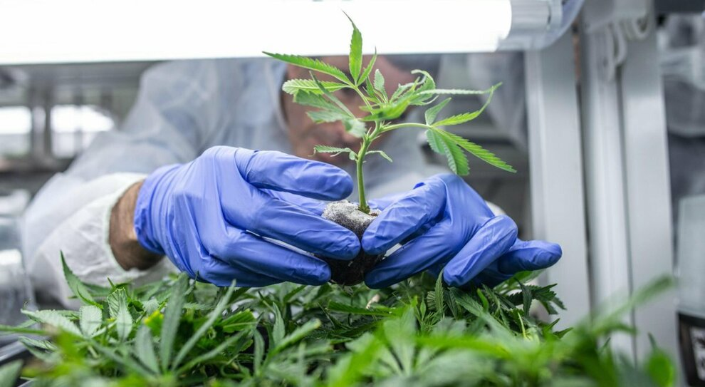 Pescara, padre e figlio coltivano insieme marijuana nella serra in cantina: arrestati