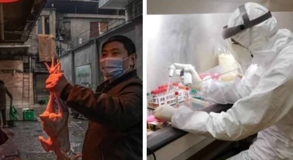 lettera di 24 scienziati sull'origine del virus: «Da Cina e Oms risposte poco credibili, ricerca contaminata dalla politica»