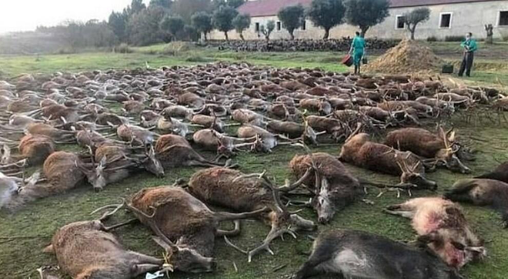 Portogallo sotto choc, massacrati 450 cervi e cinghiali: 16 cacciatori accusati di «crimini ambientali»