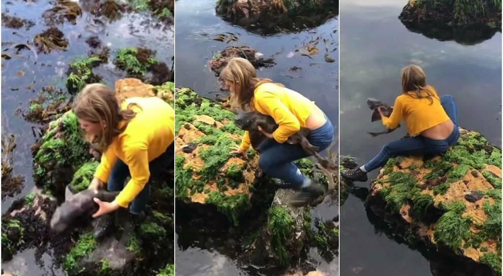 Squalo intrappolato tra le rocce per la bassa marea: ragazzina di 11 anni lo salva a mani nude